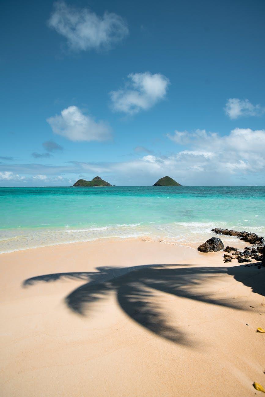 coconut tree shadow on seashore
